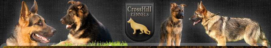 CrossHill Kennels